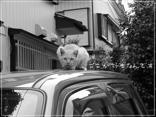 車の上がすき.jpg